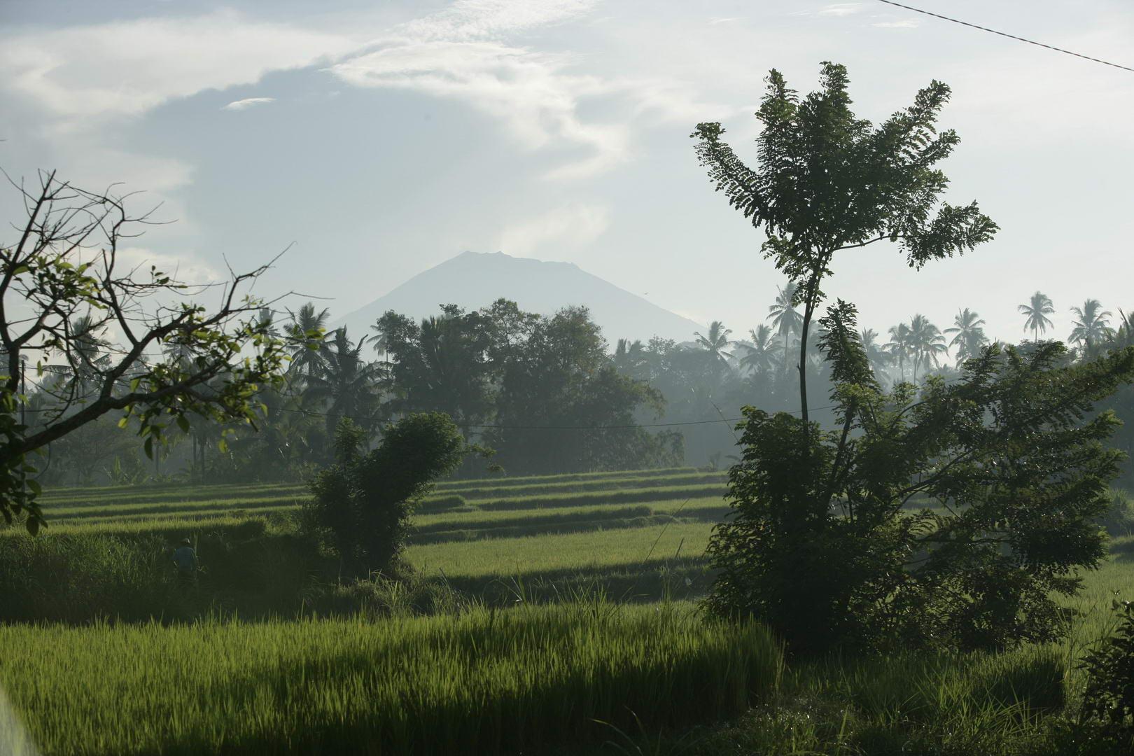 Eriks Bali 112