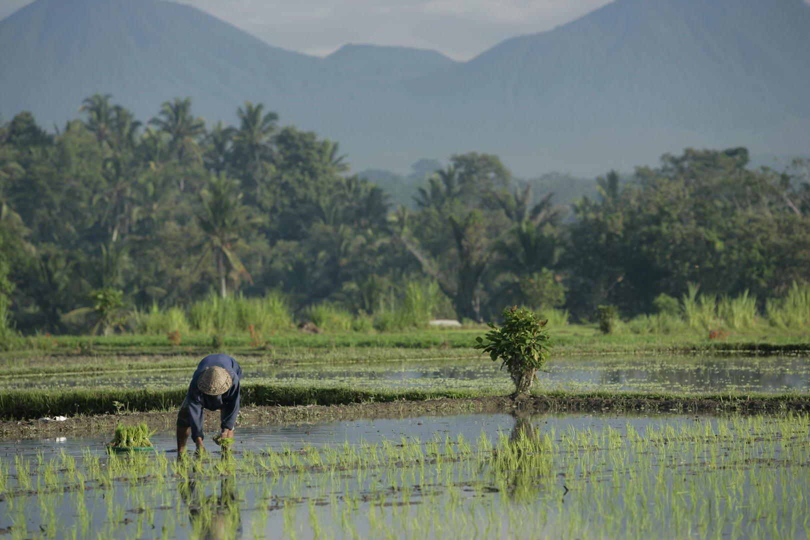 Eriks Bali 116