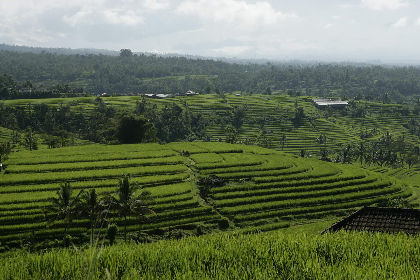 Eriks Bali 121