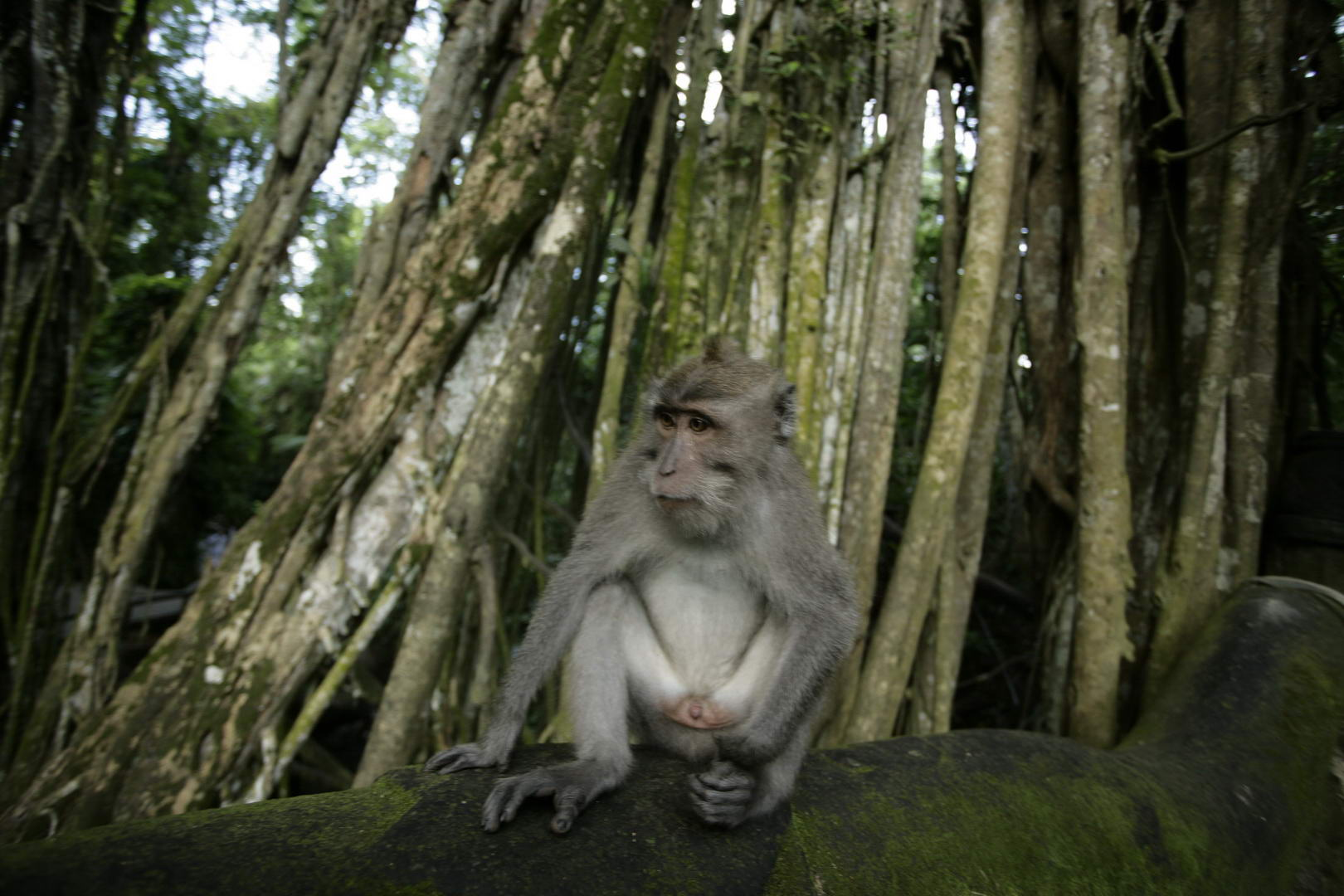 Eriks Bali 189