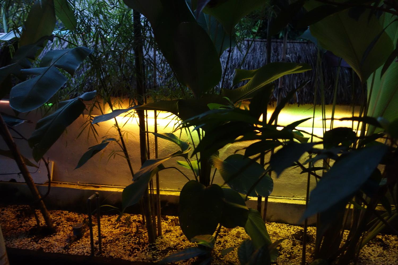 outdoor-treelight-017