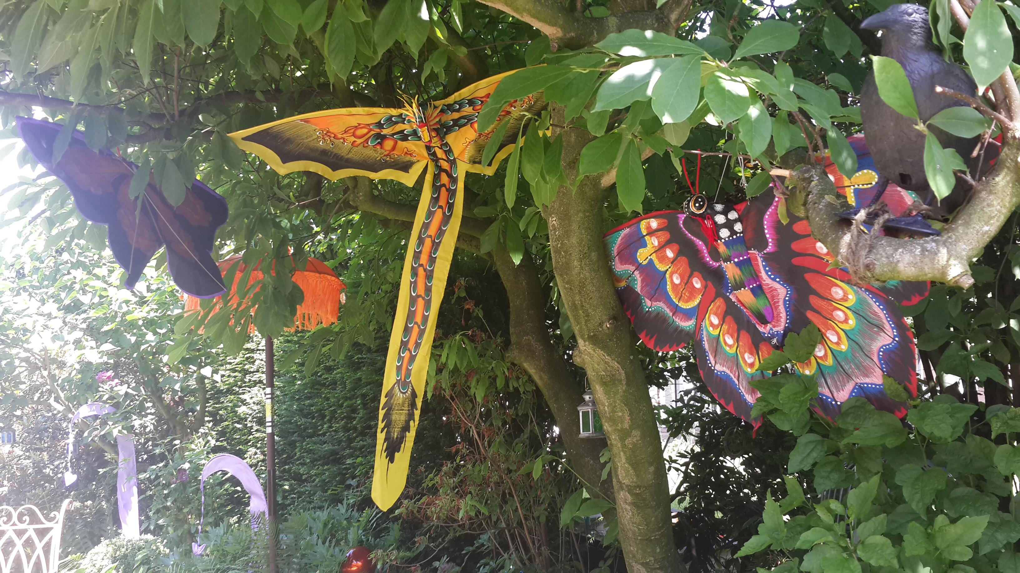 Butterfly Garden 6